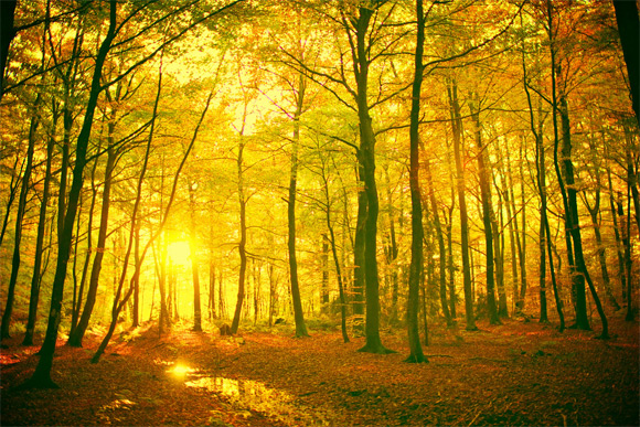 10_colorful_autumn_wallpapers_mystical_forest